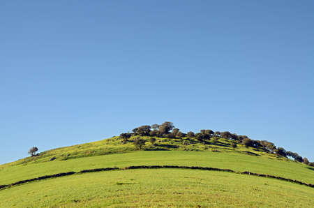 extremadura: hill and green meadows in Extremadura, Spain