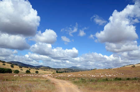 landscape with merino flock and mountains under blue sky with white clouds in southern Spain photo