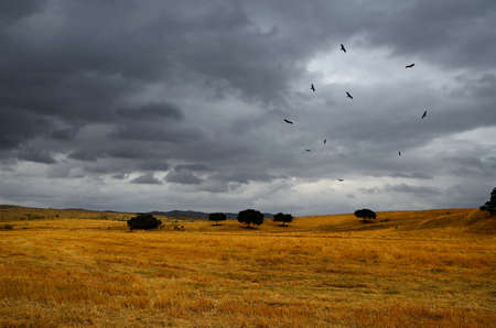 circling: summer landscape  under sky threatening storm  and  a flock of vultures circling Stock Photo