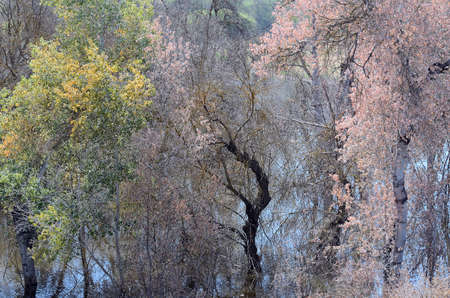 evocative: evocative and dreamy landscape with trees with leaves of different colors in a water reservoir Stock Photo