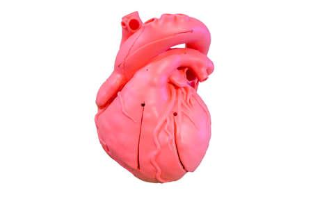 Anatomie-Modell Silikon-Typ des Herz-Kreislauf-Systems für den Einsatz in der medizinischen Ausbildung, isoliert auf weißem Hintergrund