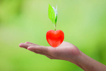 Small tree with heart-shaped roots rests on the hands of men in the concept of love tree and love the environment, on greenery blurred background