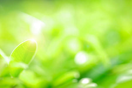 Fresh green leaf and overexposure of sunlight and flare filter on green nature blurred background at public park in morning, greenery season background