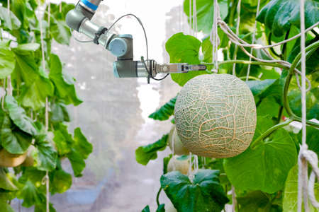 Close-up smart robotic that installed an inside on melon greenhouse garden for assistant farmers harvest melon fruits, smart farm on farming 4.0 and smart AI concept.