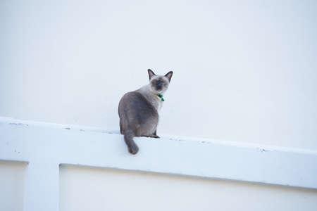 roan: Roan cat on the wall.