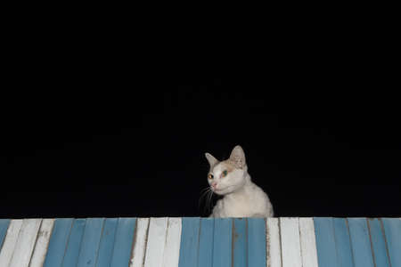 The cat on the roof in the night