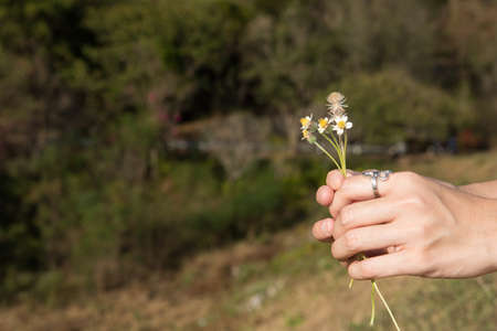 Womans hand holding a small flower.