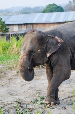 caoutchouc: Elephant in the zoo