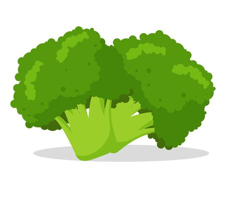Broccoli Vegetable Vector Illustration Cute and bright cartoon isolate on white background. Stock Illustratie