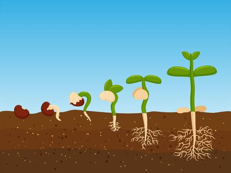 Planting trees from agricultural seeds. Growth stage of plant seedlings in fertile soil. Illustration