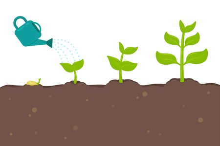 Plant growth vector Seedlings sprouting from seeds turn into large trees. Vetores