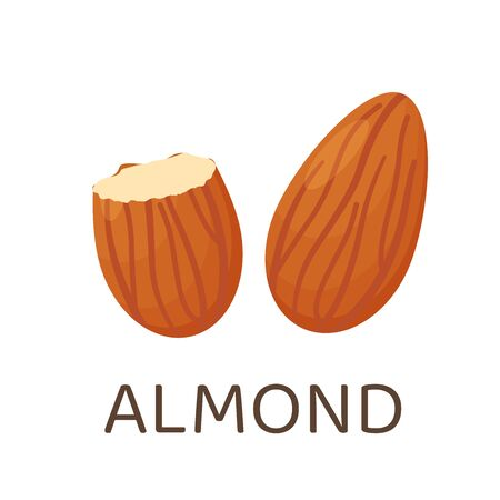 Almond seeds. Legumes that provide high energy for health lovers. Isolated on a white background. Stock Illustratie