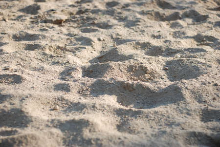 foot marks: sand