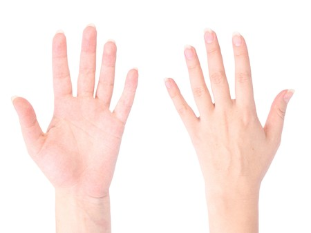front and back of the hand on white background
