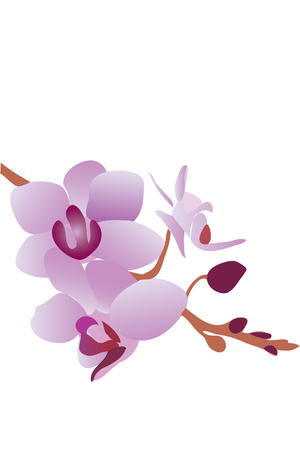 branch of beautiful blossom violet orchid (close up) Stock Vector - 7793391