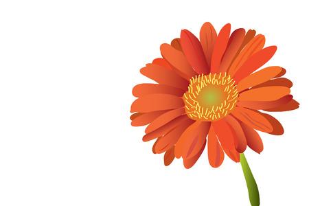 赤い美しい明るい花ガーベラ (クローズ アップ)