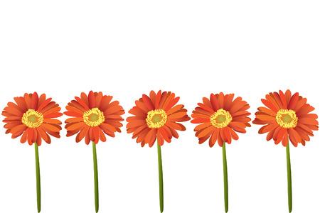 gerbera bella brillante fiore rosso (close up)
