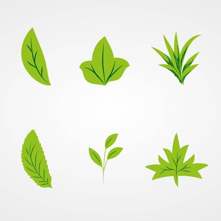 pinstripes: Beautiful   Leaves on white background (illustration)