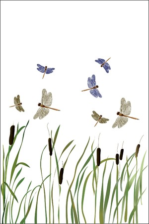 Beautiful Dragonfly and reed on white background Illustration