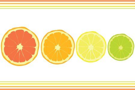 lemon lime: Circolo di limone calce arancia e pompelmo Vettoriali