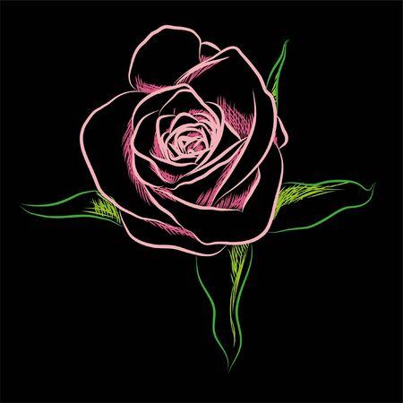 Beautiful  flowers on black background (illustration) Stock Vector - 7925919