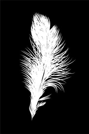 piuma bianca: Feather bianco su sfondo nero (illustrazione) Vettoriali