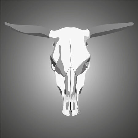 cow skull on gray background (illustration) Stock Vector - 8301663