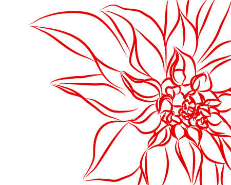 pinstripes: Beautifull flowers on white background (illustration)