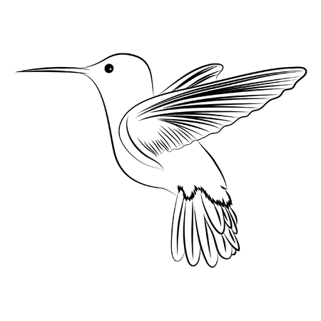 Cute humming bird on white background Vector