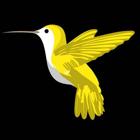 black bird: Cute humming bird on black background Illustration