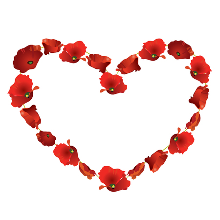 beautiful red poppy heart  on white background Vector
