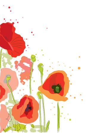 flor silvestre: amapola de pintura de bella flor de acuarela rojo brillante