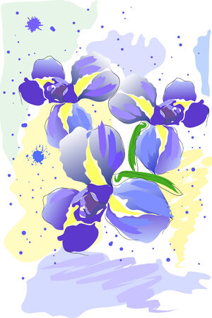 beautiful blossom watercolor iris on white background Vector