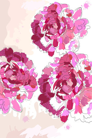 peony: beautiful blossom watercolor pink peony on white background