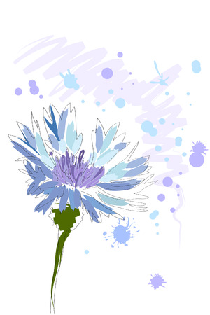 wildflowers: beautiful blue watercolor cornflower with splash on white background