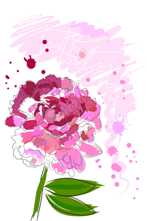 beautiful blossom watercolor pink peony on white background Stock Vector - 8302307
