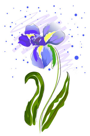 iris flower: beautiful blossom watercolor iris on white background