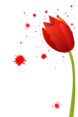 beautiful red watercolor tulip on white background Stock Vector - 8302126