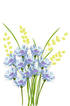 beautiful bouquet of blue cornflower and spica Vector