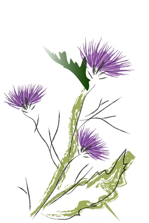 wildflowers: blossom thistle Illustration
