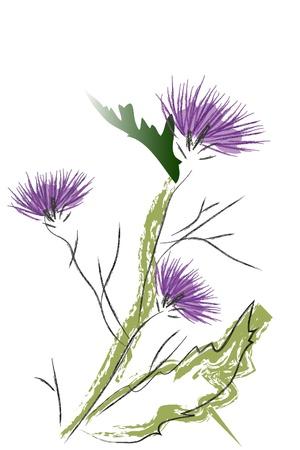 prickles: thistle Blossom