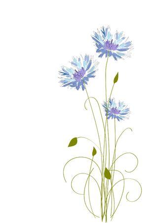 cornflowers: cornflower