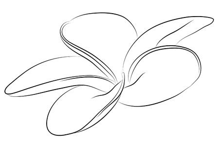 gerbera daisy: bella flor
