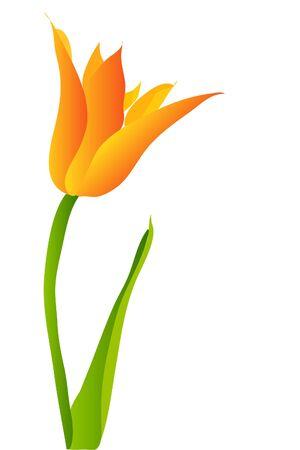 Tulipano Vettoriali