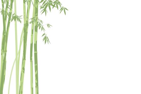 japones bambu: Ilustraci�n de vectores hermosa bamb� sobre fondo blanco Vectores