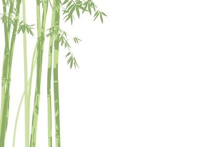 fengshui: vector illustration beautiful bamboo on white background