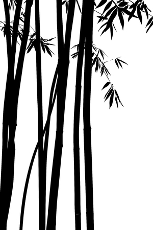 bamboo leaves: vector illustration beautiful bamboo on white background