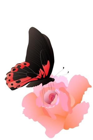 bella flor rosa aumentó en fondo blanco