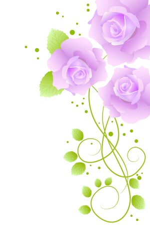Rosas de bella flor púrpura sobre fondo blanco