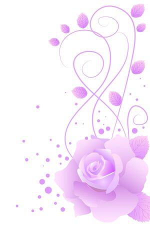 beautiful purple blossom rose on white background